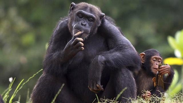 25 Most Intelligent Animals On Earth