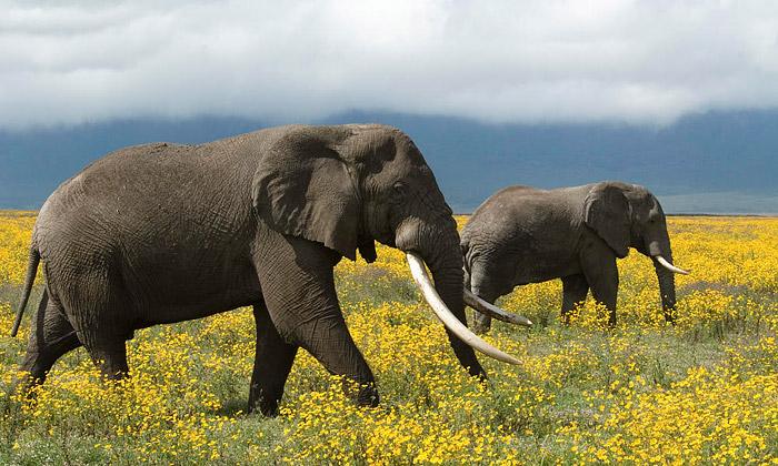 Top 25 Deadliest Animals in the World