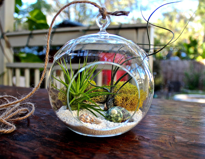 Everything You Need to Know About Making Terrarium
