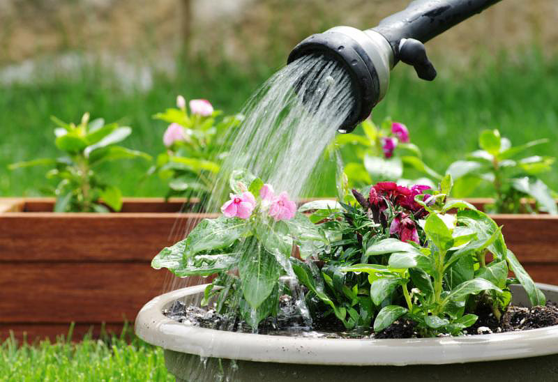 How Much And How Often To Water Potted Plants