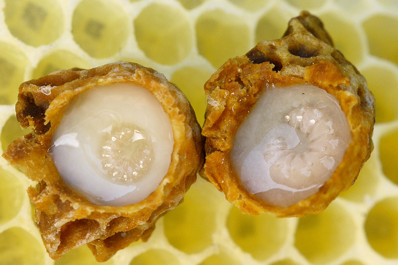 Royal Jelly - Health Benefits
