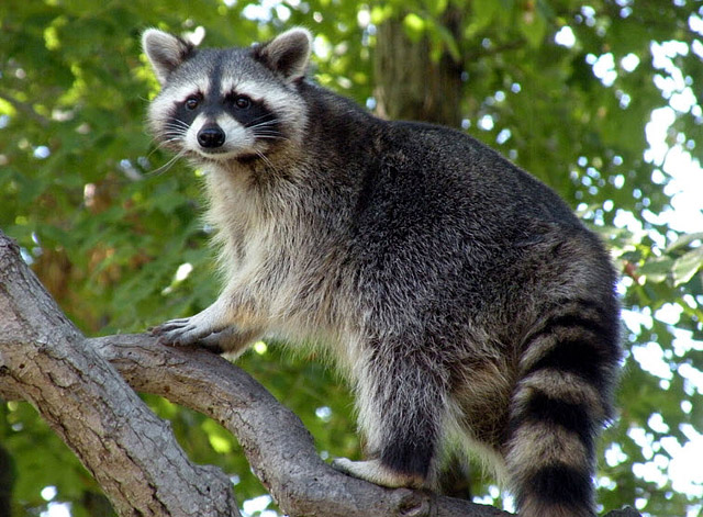 25 Most Intelligent Animals On Earth