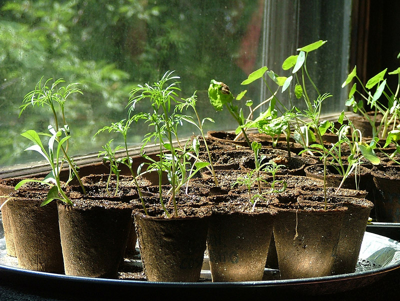 Seed Sowing - Where did I go wrong?