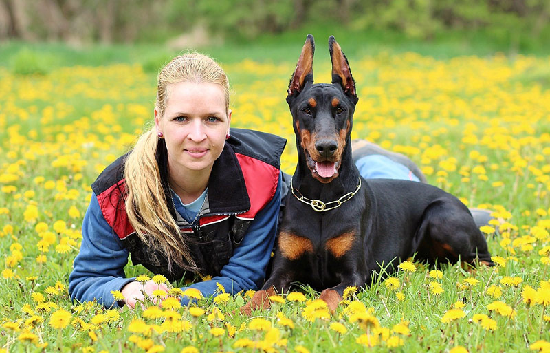 Doberman Pinscher Dog Breed Info