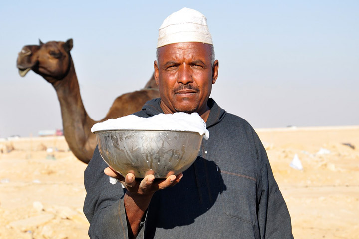 Camel Milk is Healthier Than Cow Milk!