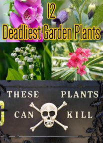 Toxic Plants - 12 Deadliest Garden Plants