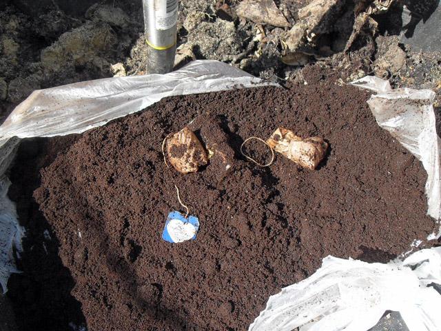 Quiet Corner:Fertilize Your Plants With Coffee Grounds and Eggshells - Quiet Corner