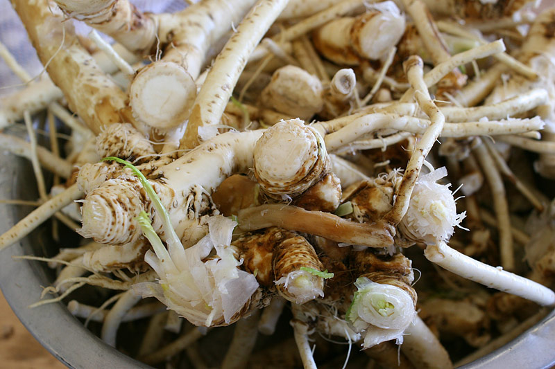 How To Grow and Prepare Horseradish