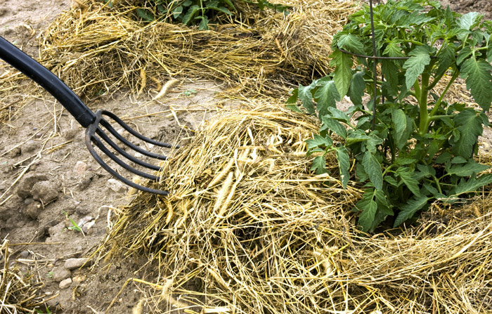 Healthy Soil: The Key to a Healthy, Productive Garden