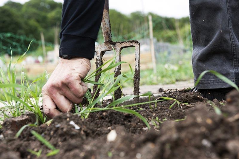 9 Natural Ways to Kill Weeds