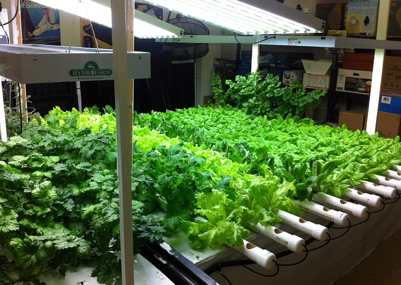 Aquaponics How to Grow Your Own Food in Water
