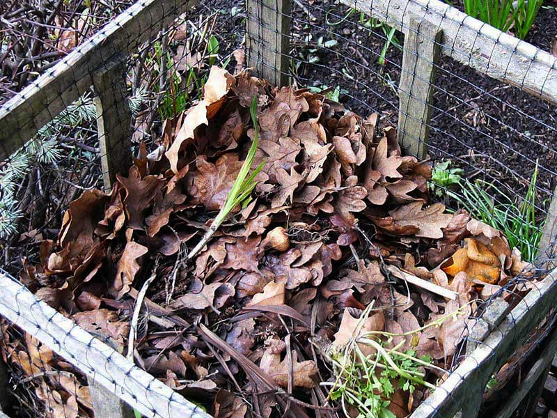 Composting Leaves