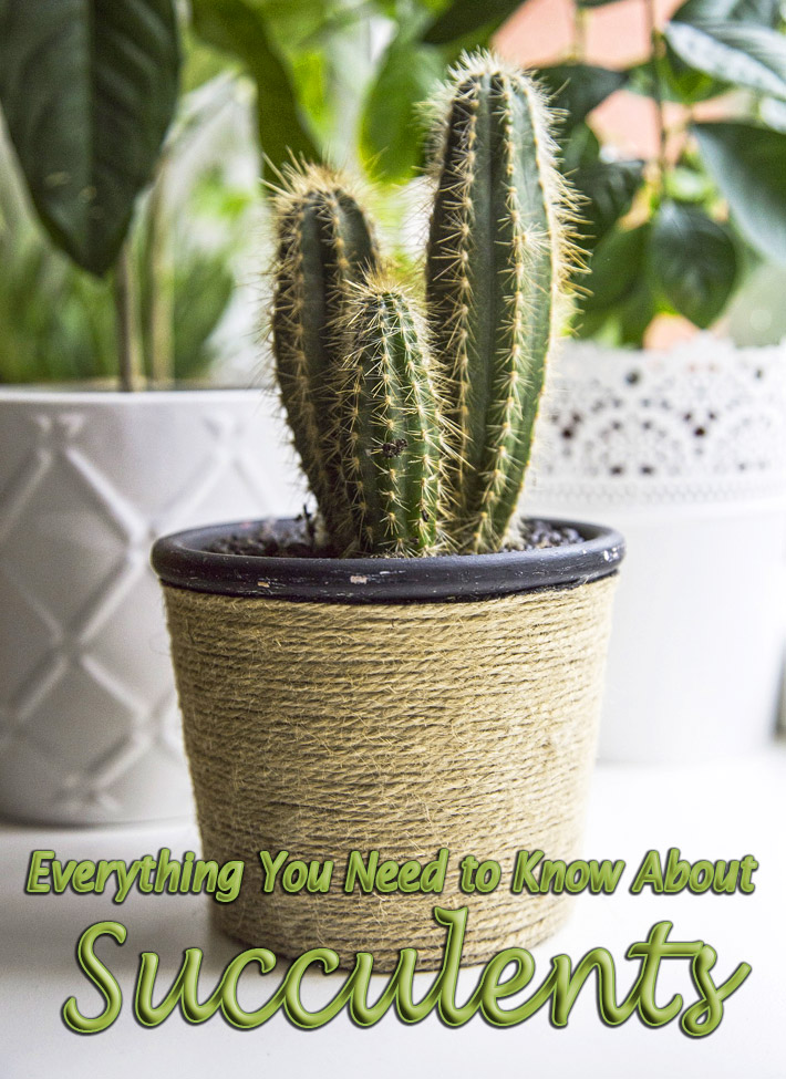 Everything You Need to Know About Succulents - Quiet Corner