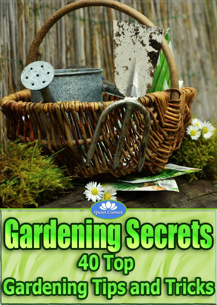 Best Gardening Tips and Tricks Video