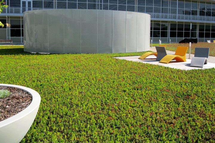 Ground Covers Carpet Sunny Locations with Sedum