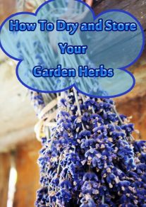 How To Dry and Store Your Garden Herbs