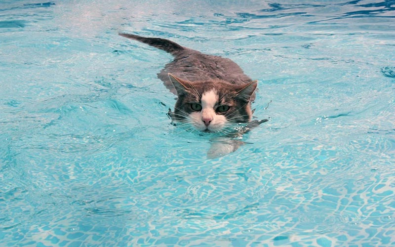 Is It Chlorine In Pools Safe For Pets Quiet Corner
