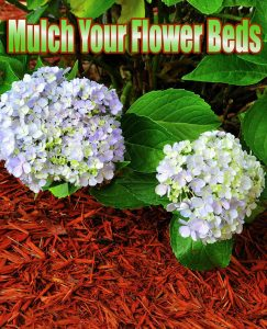 Mulch Your Flower Beds
