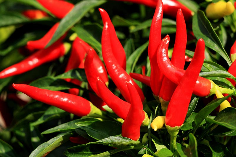 Top Foods That Burn More Calories Than They Contain