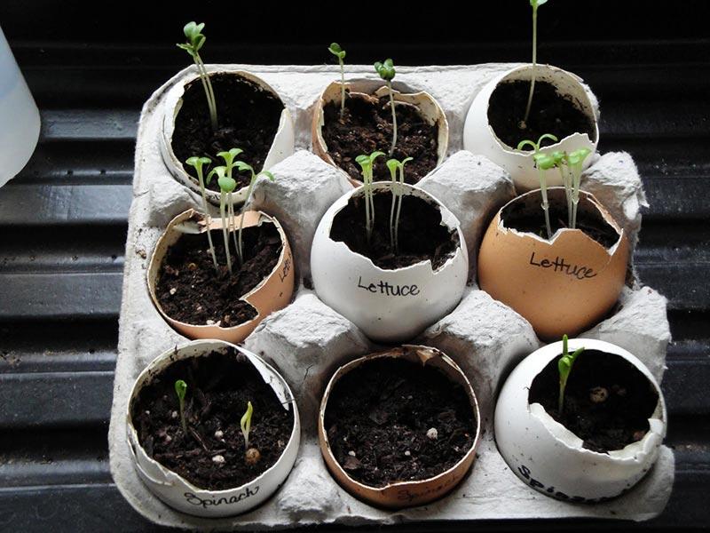 You Should Start Using Eggshells In Your Garden