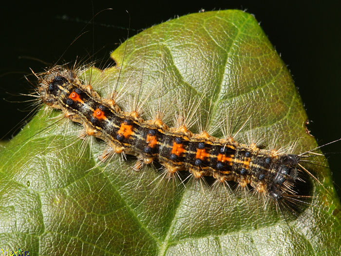 Which Caterpillars Eat My Garden Plants And Vegetables?