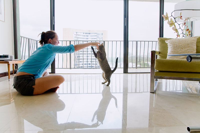 You Want to Change Your Cat's Behavior? - Train Your Cat!