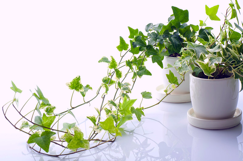 7 Indoor Plants That Are Dangerous to Children & Pets