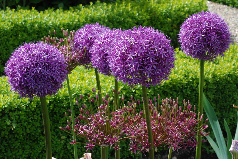 Grow These 10 Easy Perennials From Seed