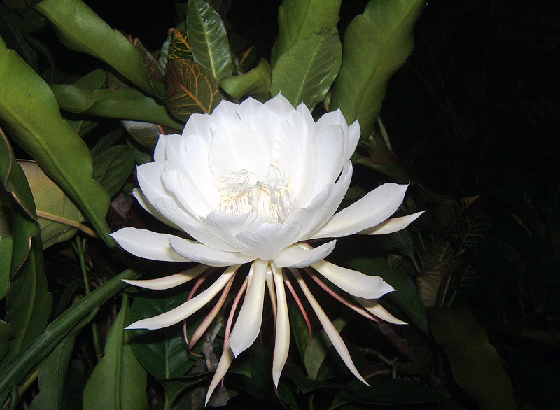 10 Most Beautiful And Rarest Flowers In The World