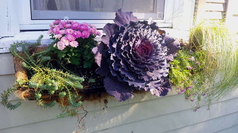 Outdoor Decoration - Fall Flower Boxes Ideas