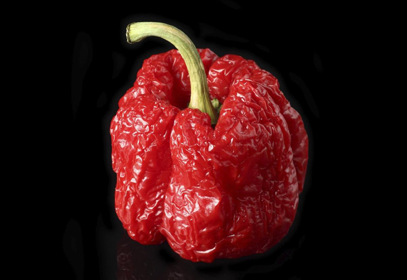Top 10 Hottest Peppers in The World 2016