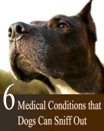 6 Medical Conditions that Dogs Can Sniff Out