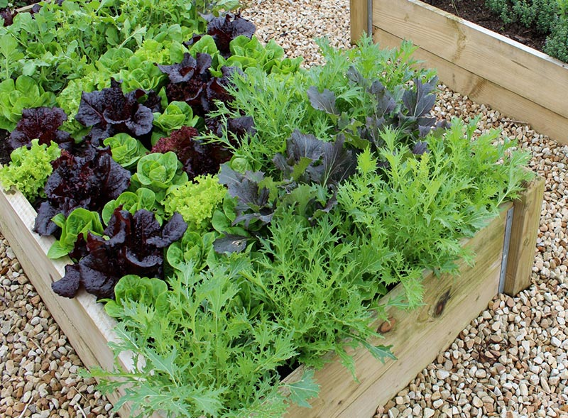 Easy vegetables to grow quiet corner for Easiest vegetables to grow