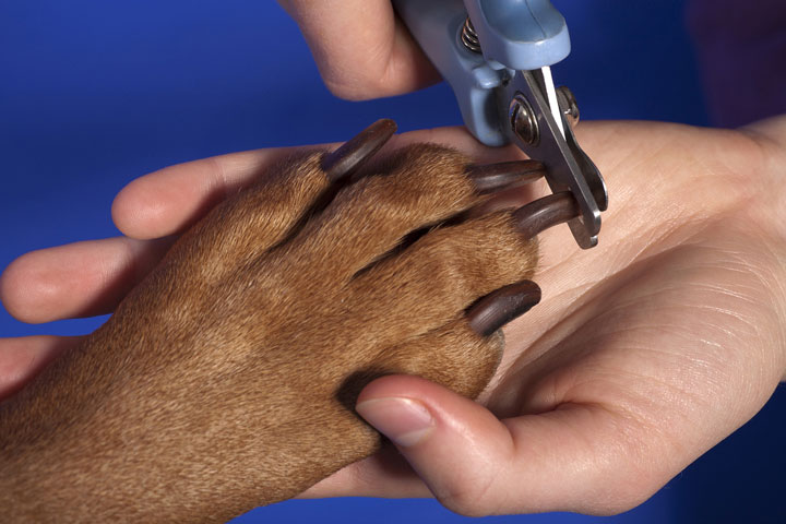 How To Trim Dog Nails For a Perfect Pooch Pedicure