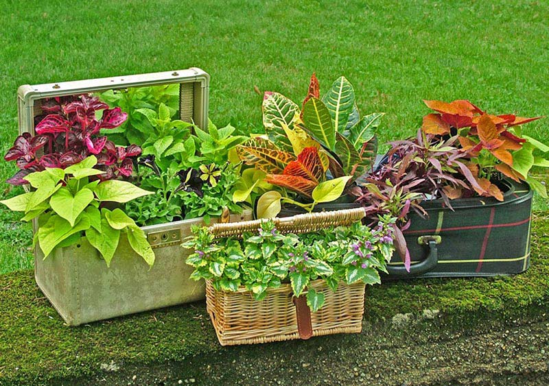 Quiet Corner Container Gardening Ideas: Ideas For Container Gardens