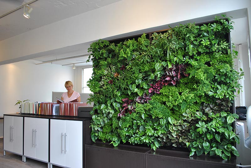 Living wall vertical garden benefits quiet corner Green walls vertical planting systems