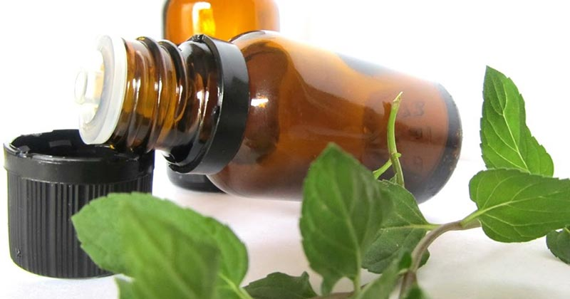 Oregano Oil Health Benefits