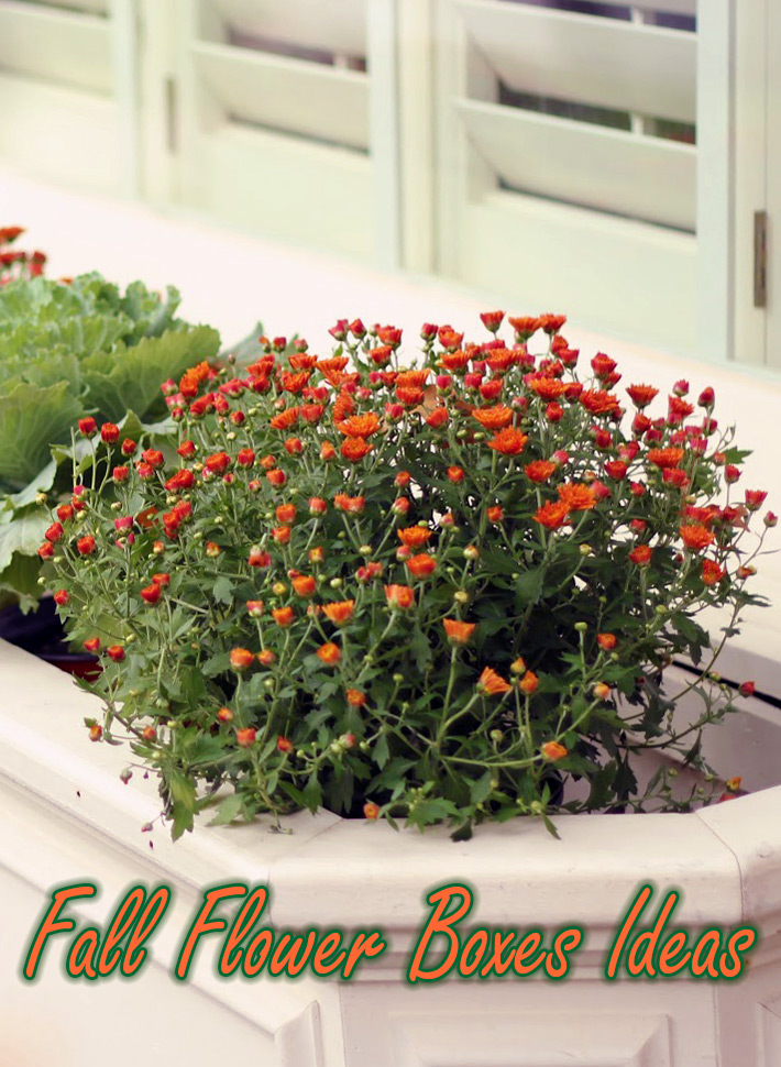 Outdoor Decoration - Fall Flower Boxes Ideas - Quiet Corner