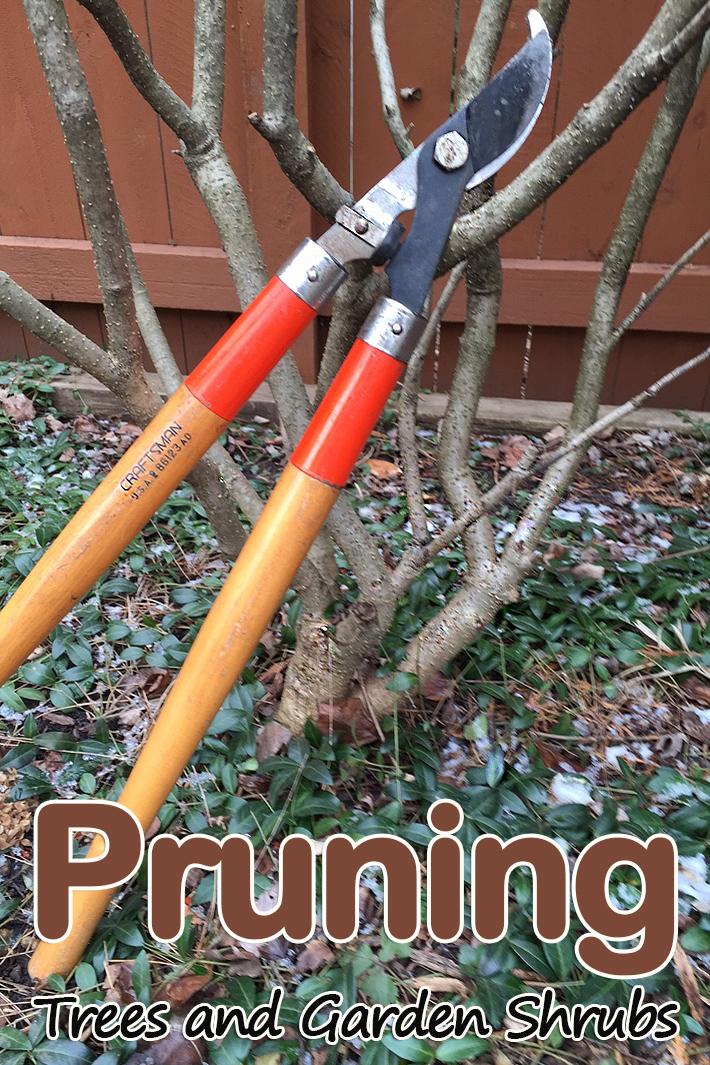 Pruning a Tree and Garden Shrubs - Quiet Corner