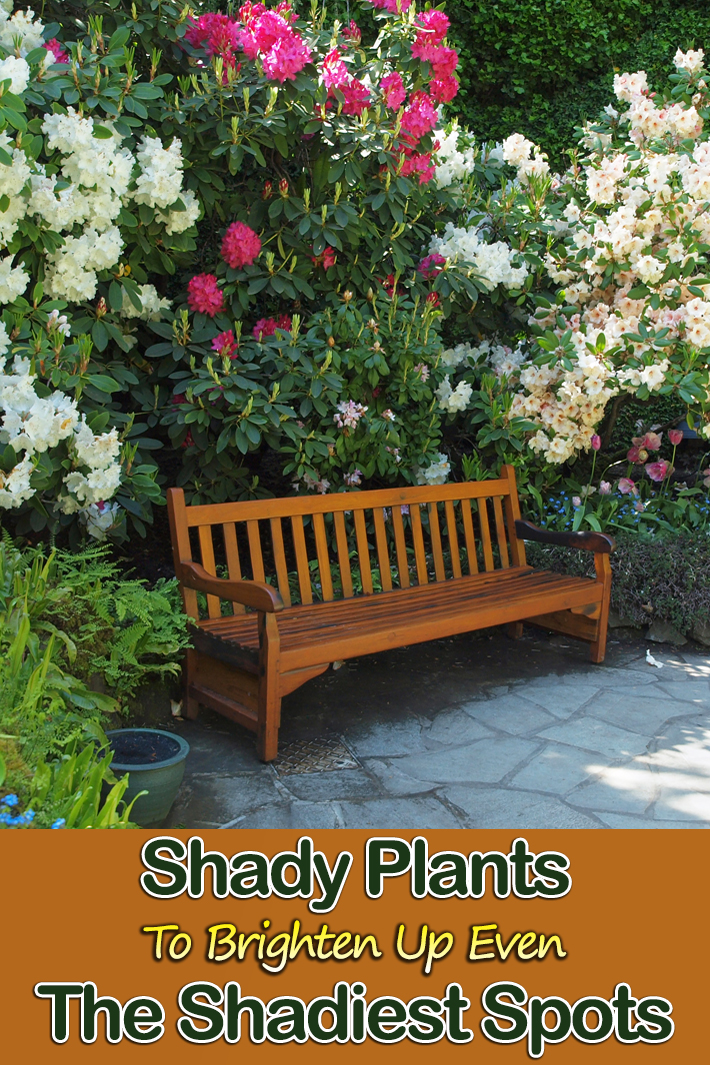 Shady Plants To Brighten Up Even The Shadiest Spots - Quiet Corner