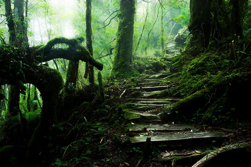 Taiping Mountain Path in Taiwan
