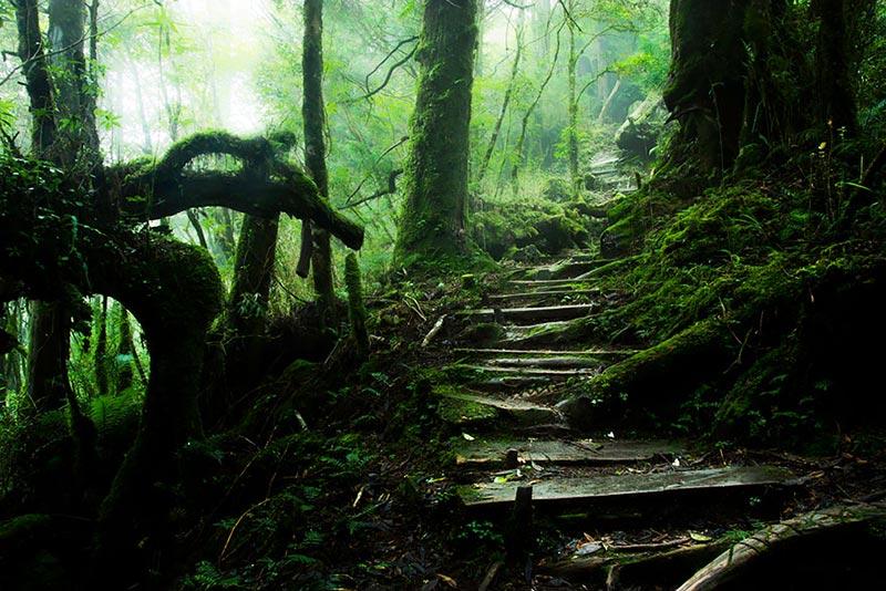 Taiping Mountain Path in Taiwan