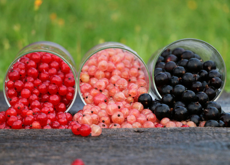 For Perennial Fruit Gardens, Berries Are the Way to Grow