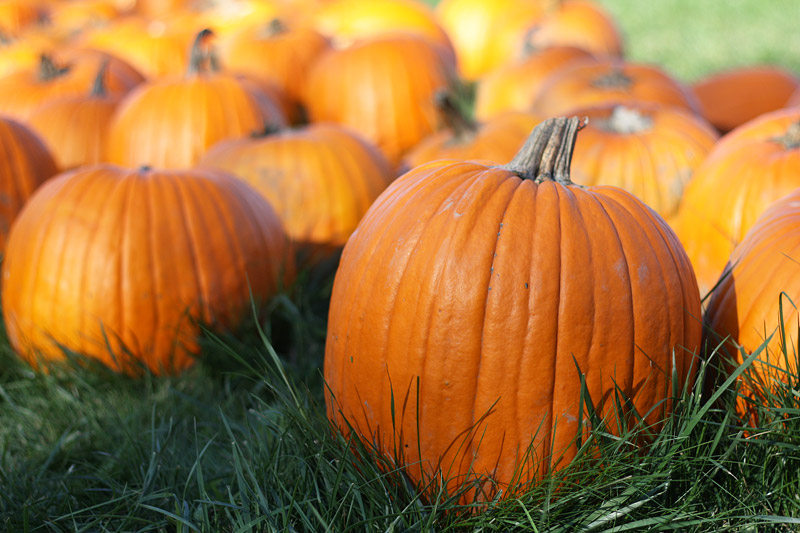 Pumpkin 8 Impressive Health Benefits