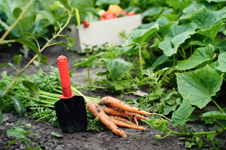 Fall vegetable garden vegetables to grow during fall quiet corner - Gardening in fall ...