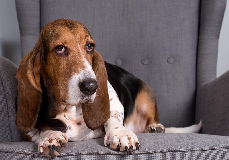 The Best Indoor Dog Breeds