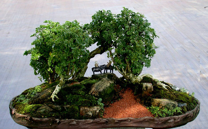 Selecting the Right Bonsai for Your Home