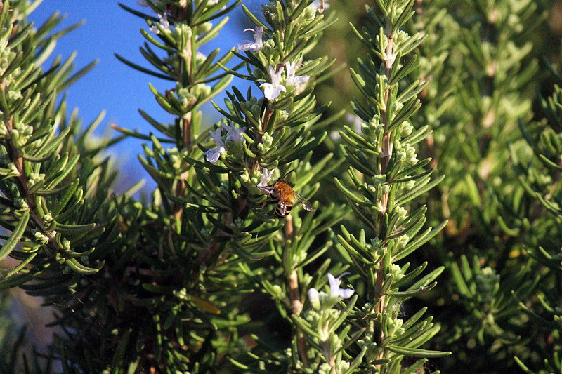 Natural Bug Repellents - Plants to Help Keep Bugs at Bay