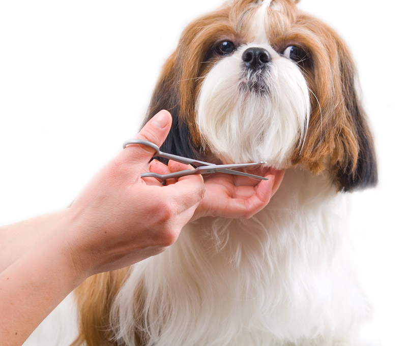 Dog Grooming - How to Groom Your Dog at Home