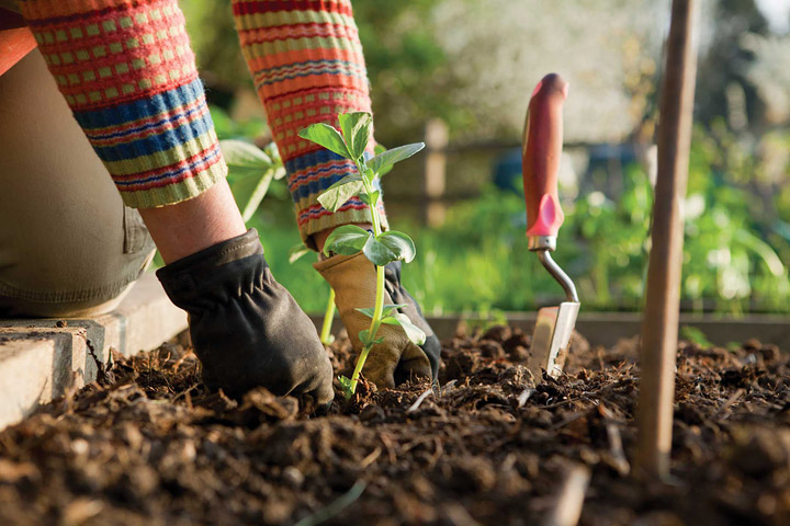 Fall Gardening: What to Plant in Your Region Now